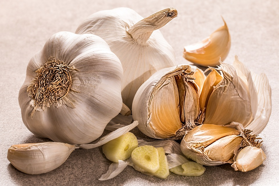 garlic antibiotic